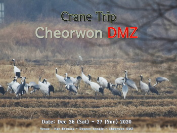 Crane Trip to Cheorwon DMZ (2 Days)