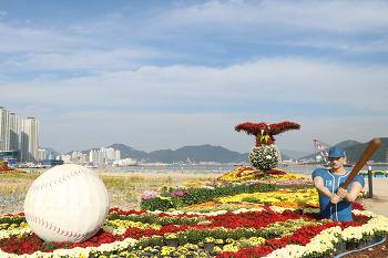 더 화려해진 2020 창원 드라이브스루 마산국화축제