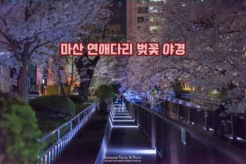 밤에 걷는 조용한 벚꽃 길, 사람들이 없어서 더 좋다. 마산 문화동 연애다리