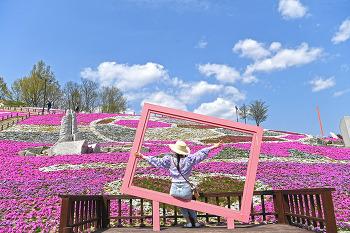진분홍색 꽃잔디와 예술향기 피어나는 산청 생초국제조각공원!(산청여행/산청명소)