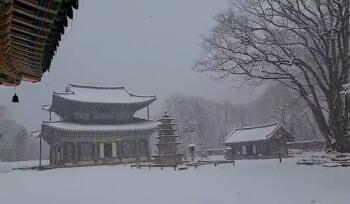 신축년 새해 첫날 하얗게 눈이 왔습니다.