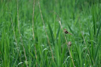 화포천생태공원 개개비,황새