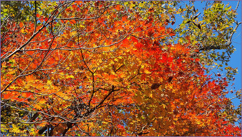 지지대고개 ~ 목감사거리 / 그윽한 가을 향기 벗삼아...