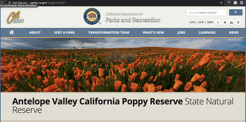 봄 꽃놀이의 최고 장소 Antelope Valley California Poppy Reserve
