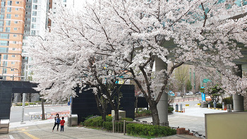바빳던 봄날/20210402
