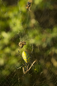 가을 거미&벌집