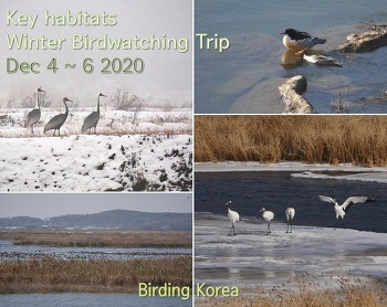 Birding Trip in Key Winter birds Habitats in Northwest