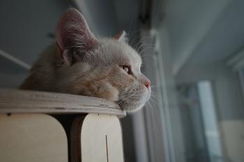 고양이의 삶