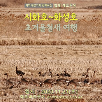 초겨울 시화호~화성호 탐조여행 (대송습지)