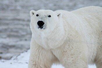 """책을 읽으면 북극곰을 살릴 수 있습니다! """"북꼼 프로젝트""""에 함께해 주세요!"""