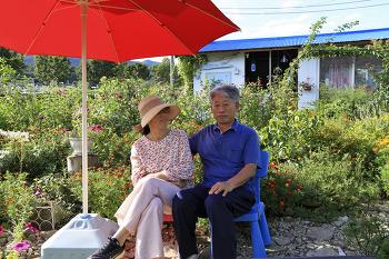 성북동집 꽃밭(중도일보 취재)/20210903