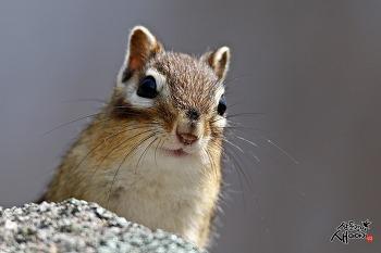 비슬산 다람쥐