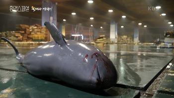 아무도 주목 않은 상괭이의 죽음, 관심만이 저 돌고래를 살릴 수 있다