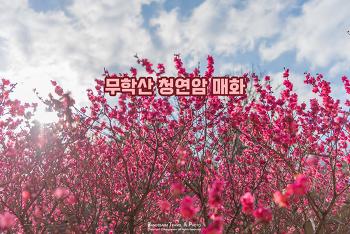 산 아래 작은 사찰에 따뜻한 봄 매화 향기가 가득하다