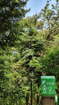 장산, 건강의 숲길