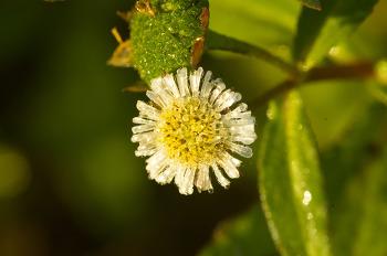 호박꽃 & 한련초꽃