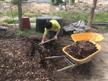 [유기농 순환농법] 구아바나무에 구아바 부산물로 만든 유기질 퇴비 주기