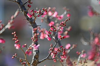 봄의 전령사 홍매화! '창원의 집'에 도착하다!