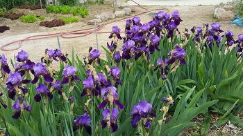 청초의 빛, 5월의 봄꽃