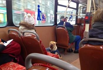 독일생활_사람처럼 세금,버스요금을 내는 반려견