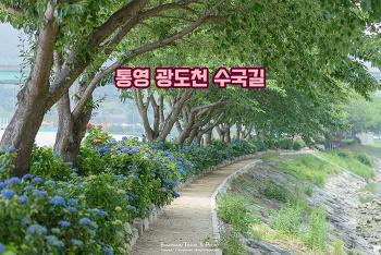 분홍, 보라, 파랑 형형색색 수국들이 반겨주는 길, 통영 광도천 수국 길