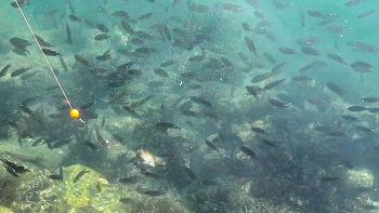 물고기만 우글우글, 아무도 없는 섬에서 가족 낚시 여행(남해 조도낚시 1~2편 몰아보기)