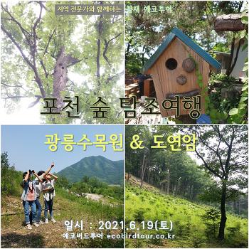 포천 숲 탐조여행 : 광릉수목원 & 도연암