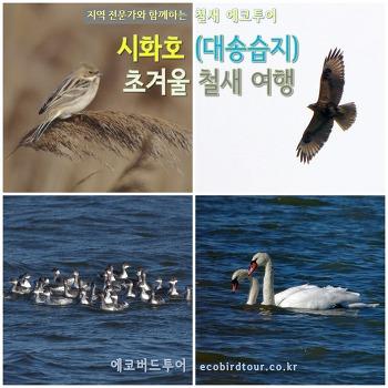 초겨울 시화호 탐조여행 (대송습지)