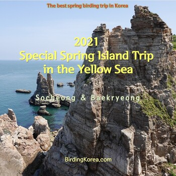 2021 Special Spring Island Trip in the Yellow Sea