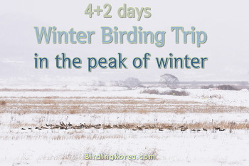 Birding trip of winter peak (4+2 days)