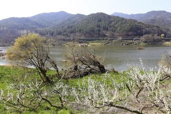 섬진강변 동안길(곡성 침실습지-구례 구례교/2020년 여름 수해현장)
