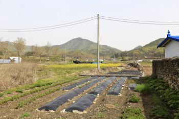 봄날의 성북동집 텃밭/20210417-20210418