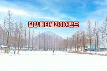 하얗게 눈이 내린 겨울 메타세콰이어 길 풍경