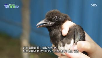 아파트 많은 도심에 남은 새들, 공존을 위한 노력이 필요하다
