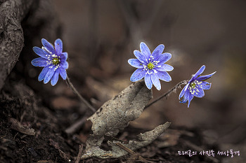 천마산 야생화, 화사한 봄을 품다