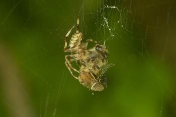 풀밭의 곤충들(노린재, 파리, 잠자리, 나비, 거미, 바구미 등)