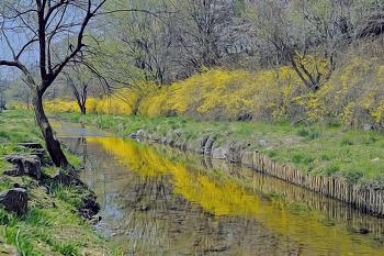 인천둘레길 6코스 장수천따라 봄을 즐기기