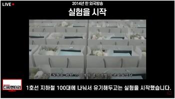 한국인들은 얼마나 정직할까..자랑스런 세계1위 국민