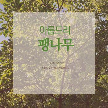 카드뉴스로 즐기는 숲해설-(19)팽나무