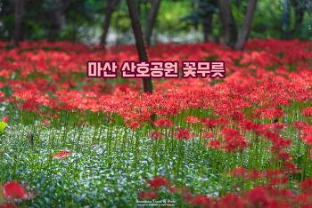 마산 산호공원 꽃무릇, 온통 붉은색으로 물든 예쁜 가을