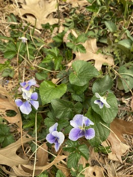 봄꽃...