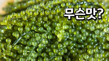 바다포도(sea grapes)에 관한 흥미로운 사실
