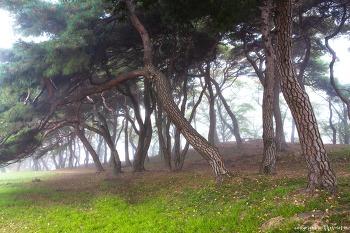 소나무 숲 3