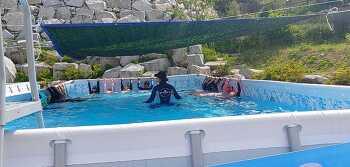 홍광초등학교  찾아가는 이동식 수영장 설치하고 생존수영수업 실시