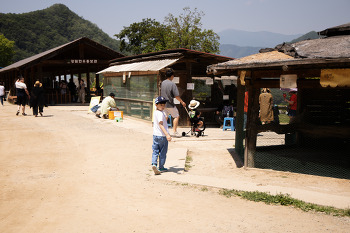 아이들과 즐기기 좋은 곳, 춘천 해피목장