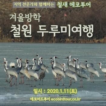 겨울방학 철원 두루미여행 (1월11일)