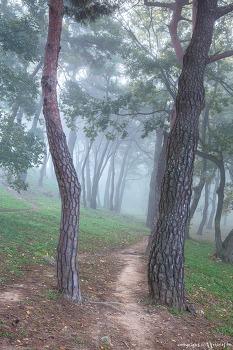 소나무 숲 2