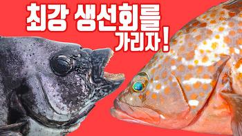 대한민국에서 가장 맛있는 횟감은? 입질의 추억배 생선회 월드컵!!