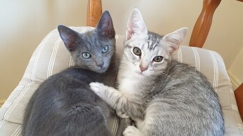 고양이도 광견병에 걸릴까요?