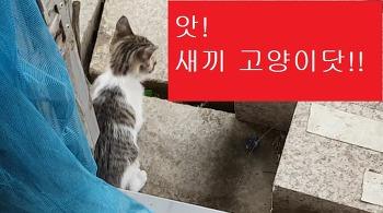 [길고양이]이 그지같은 집구석을 밝혀주는 아름다운 생명체들